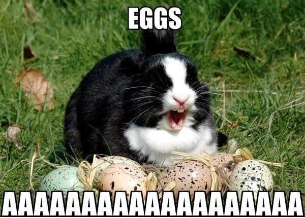 Easter Bunny Meme Eggs