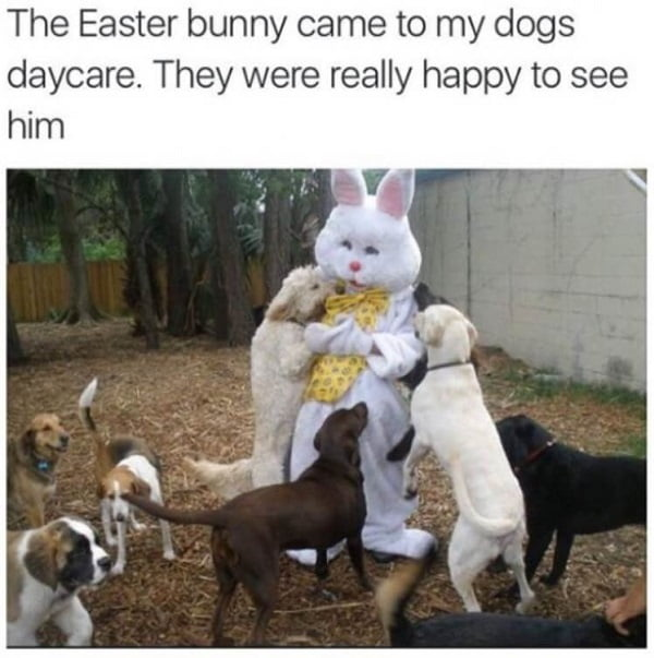 Easter Memes For Students